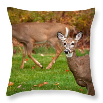 Two Visitors Throw Pillow by Karol Livote