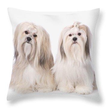 Two White Lhasa Apso Puppies St. Albert Throw Pillow by Corey Hochachka