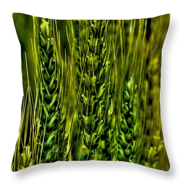 Unripened Wheat Throw Pillow by David Patterson