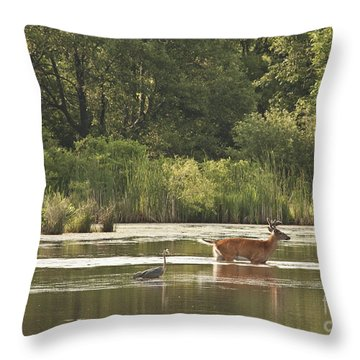 Throw Pillow featuring the photograph Unusual Pair  by Jeannette Hunt