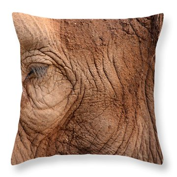 Up Close And Personal Throw Pillow by Mary Mikawoz