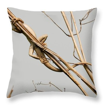 Throw Pillow featuring the photograph Vantage Point by Fotosas Photography