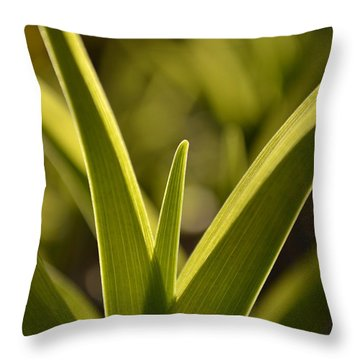 Variegated Light 1 Throw Pillow