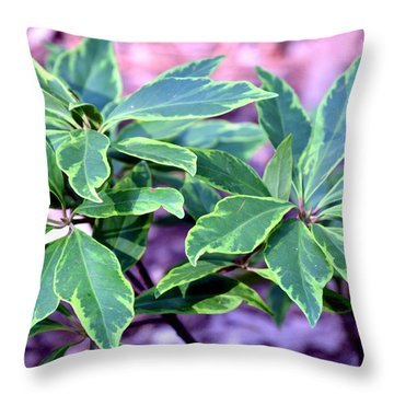Varigated Verde Throw Pillow by Maria Urso