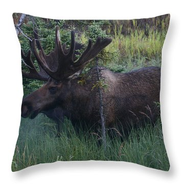 Throw Pillow featuring the photograph Velvet by Doug Lloyd