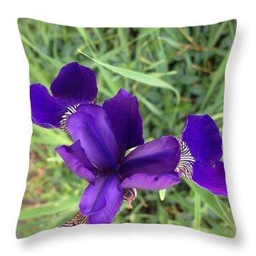 Velvet Royale Throw Pillow