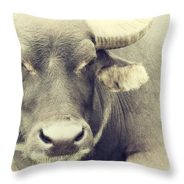 Very Serious Throw Pillow by Karol Livote