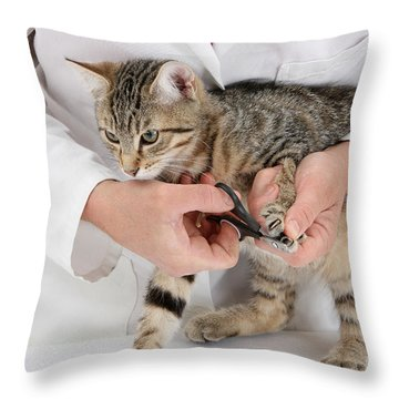 Vet Clipping Kittens Claws Throw Pillow by Mark Taylor