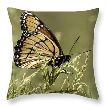 Throw Pillow featuring the photograph Viceroy Butterfly by Betty Depee
