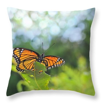 Throw Pillow featuring the photograph Viceroy Butterfly Limenitis Archippus  by Marianne Campolongo