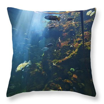 View Of Fish In An Aquarium In The San Throw Pillow by Laura Ciapponi