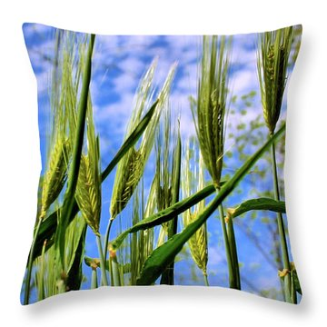Viewpoint Of An Ant Throw Pillow by Kristin Elmquist