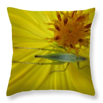 Throw Pillow featuring the photograph Visitor by Tina M Wenger