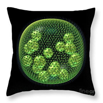 Throw Pillow featuring the digital art Volvox by Russell Kightley