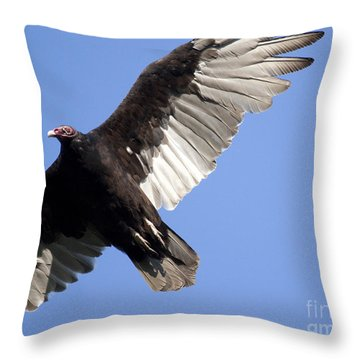 Throw Pillow featuring the photograph Vulture by Jeannette Hunt