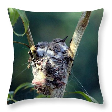 Waiting For Dinner Throw Pillow by Jo Sheehan