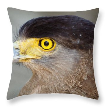 Throw Pillow featuring the photograph Waiting For Prey  by Fotosas Photography