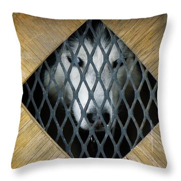 Waiting To Run Throw Pillow by FeVa  Fotos