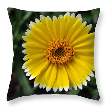 Throw Pillow featuring the photograph Wake Up by Joe Schofield