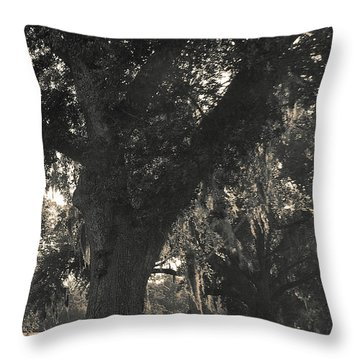 Throw Pillow featuring the photograph Walk Through The Oaks by Brian Wright