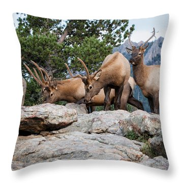 Wapiti Throw Pillow by Ronald Lutz