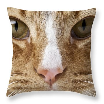 Watching And Waiting Throw Pillow by Jeannette Hunt