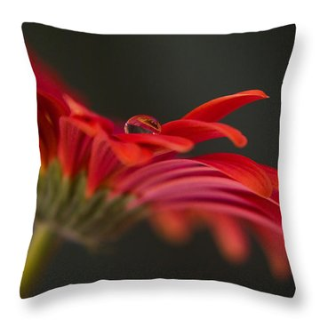 Water Drop On A Red Gerbera Flower Throw Pillow by Pixie Copley
