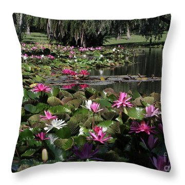 Water Lilies In The St. Lucie River Throw Pillow by Sabrina L Ryan
