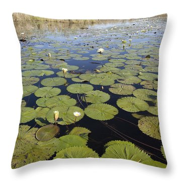 Water Lily Nymphaea Sp Flowering Throw Pillow by Matthias Breiter