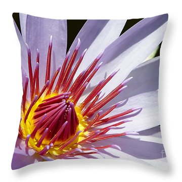 Water Lily Soaking Up The Sun Light Throw Pillow by Sabrina L Ryan