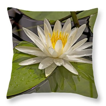 Throw Pillow featuring the photograph Waterlily  by Anne Rodkin