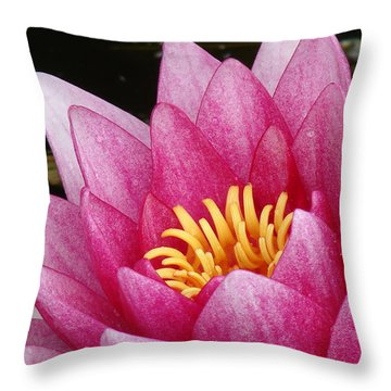 Waterlily Close-up Throw Pillow by Nicola Butt