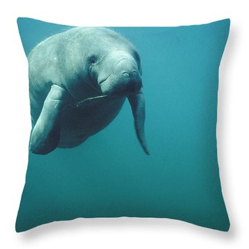 West Indian Manatee Trichechus Manatus Throw Pillow by Tui De Roy