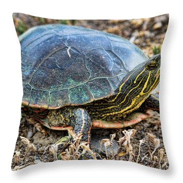Western Painted Turtle Ll Throw Pillow