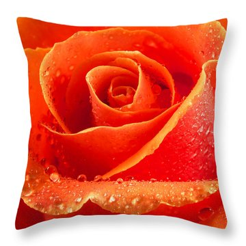 Wet Rose Throw Pillow by Jean Noren