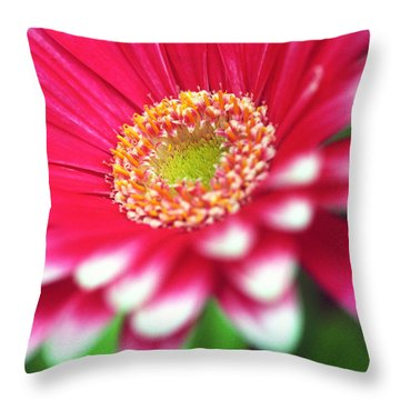 What A Daisy Throw Pillow by Kathy Yates