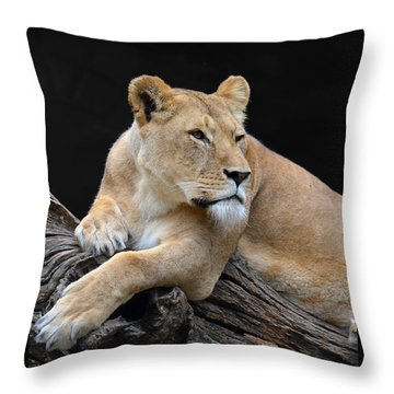 What Is Over There Throw Pillow by Eva Kaufman