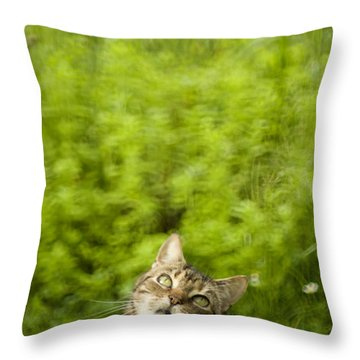 What Is Up There Throw Pillow by Angel  Tarantella