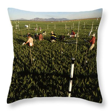 Wheat And Elevated Carbon Dioxide Throw Pillow by Science Source