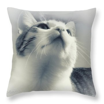 Whiskers Throw Pillow by Jutta Maria Pusl