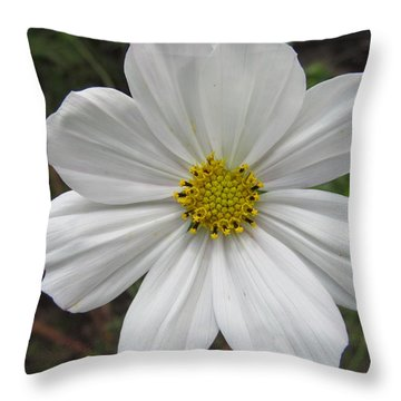 Throw Pillow featuring the photograph White Beauty by Tina M Wenger