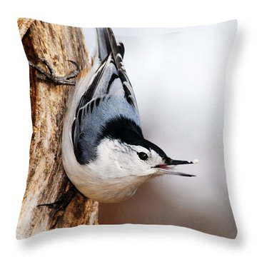 White-breasted Nuthatch 3 Throw Pillow by Larry Ricker