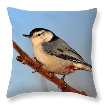 White-breasted Nuthatch Throw Pillow by Tony Beck