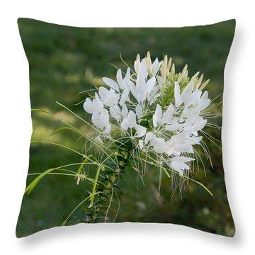 White Cleome Throw Pillow