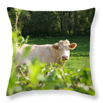 White Cow Throw Pillow