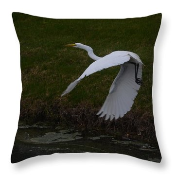 White Egret Throw Pillow by Randy J Heath