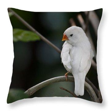 White Finch Throw Pillow