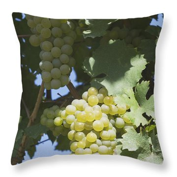 White Grapes On The Vine Throw Pillow by Michael Interisano
