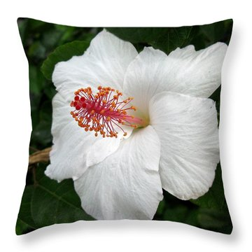 Throw Pillow featuring the photograph White Hibiscus by Carol Sweetwood