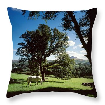 White Horse At Powerscourt, Co Wicklow Throw Pillow by The Irish Image Collection